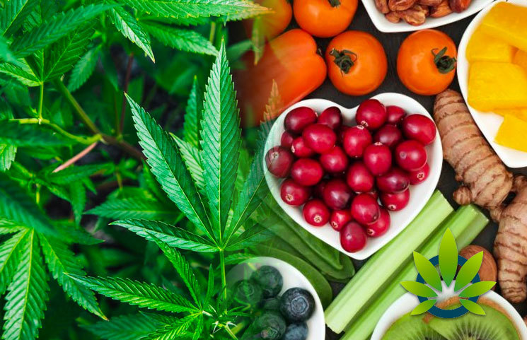 CBD for self-care daily routine | Plant of Life
