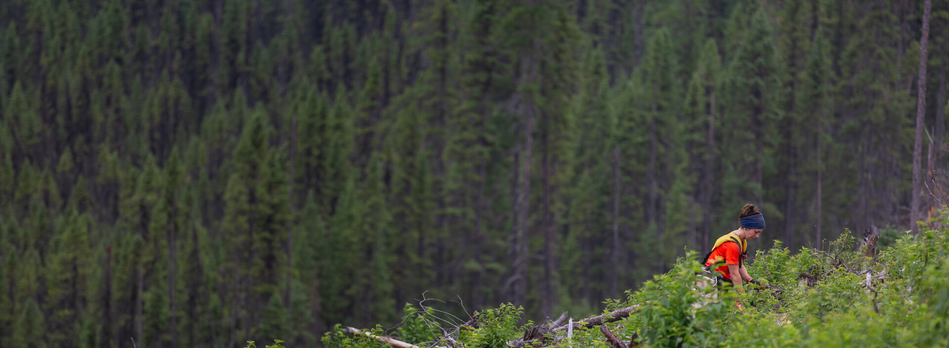 Tree-Page-Banner (2)